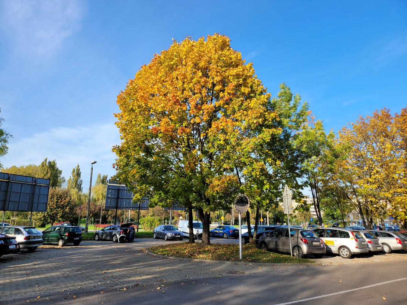 Z Fold2 Drzewo