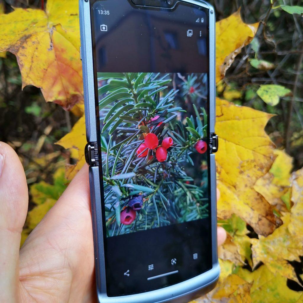 Motorola Razr 5G podgląd zdjęcia