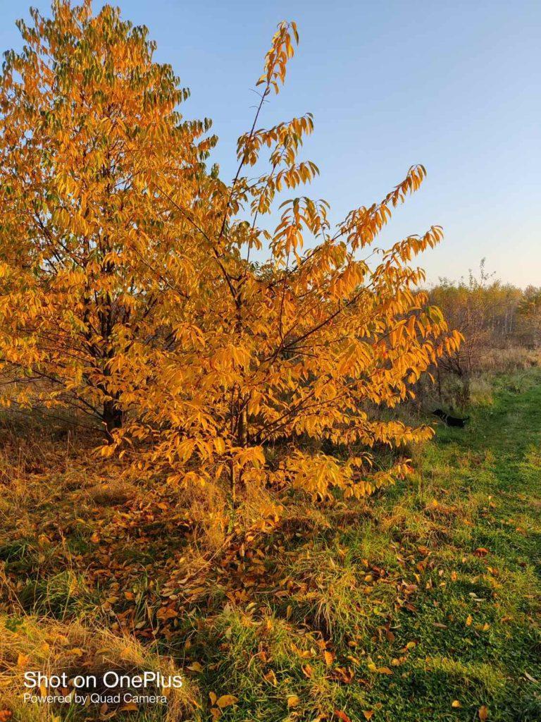 oneplus-8t-glowny-drzewo