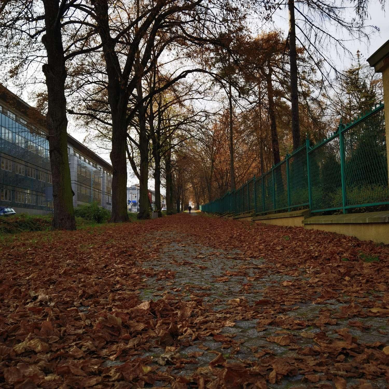 Huawei Mate 40 Pro zdjęcie jesienna alekjka