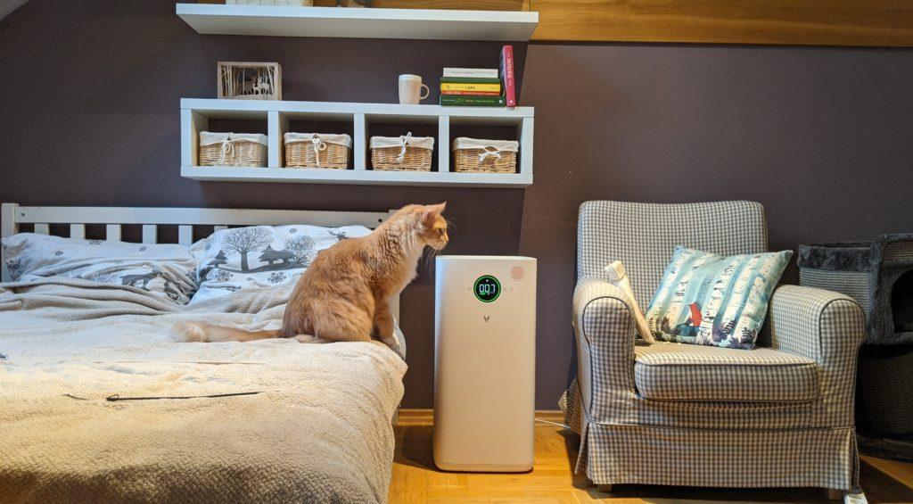 rudy kot maine coon pochylony nad oczyszczaczem powietrza