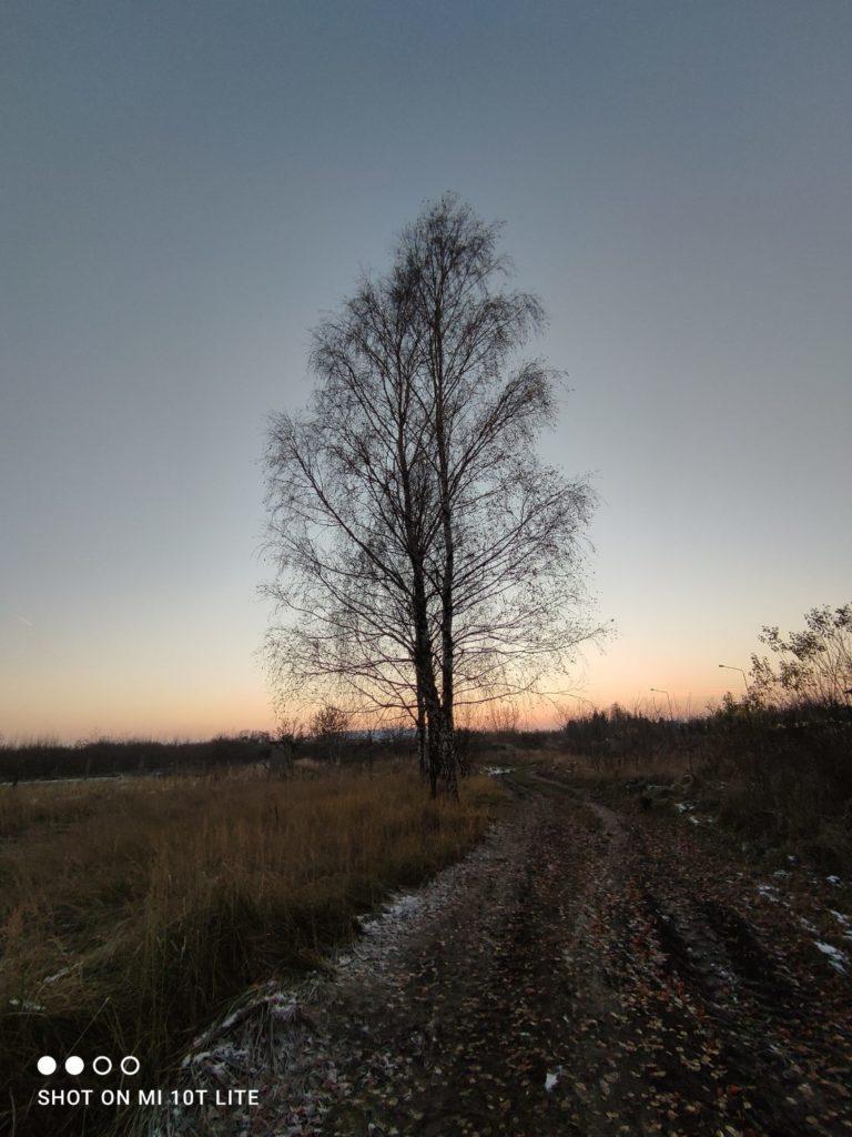 drzewo obiektyw ultraszerokokątny w Xiaomi Mi 10T Lite 5G