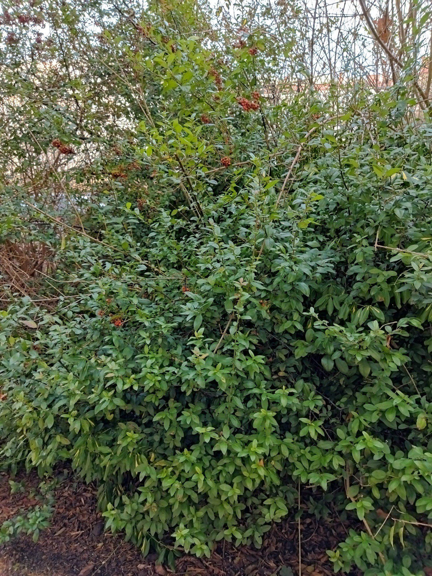 zdjęcie standardowe poco m3 krzew