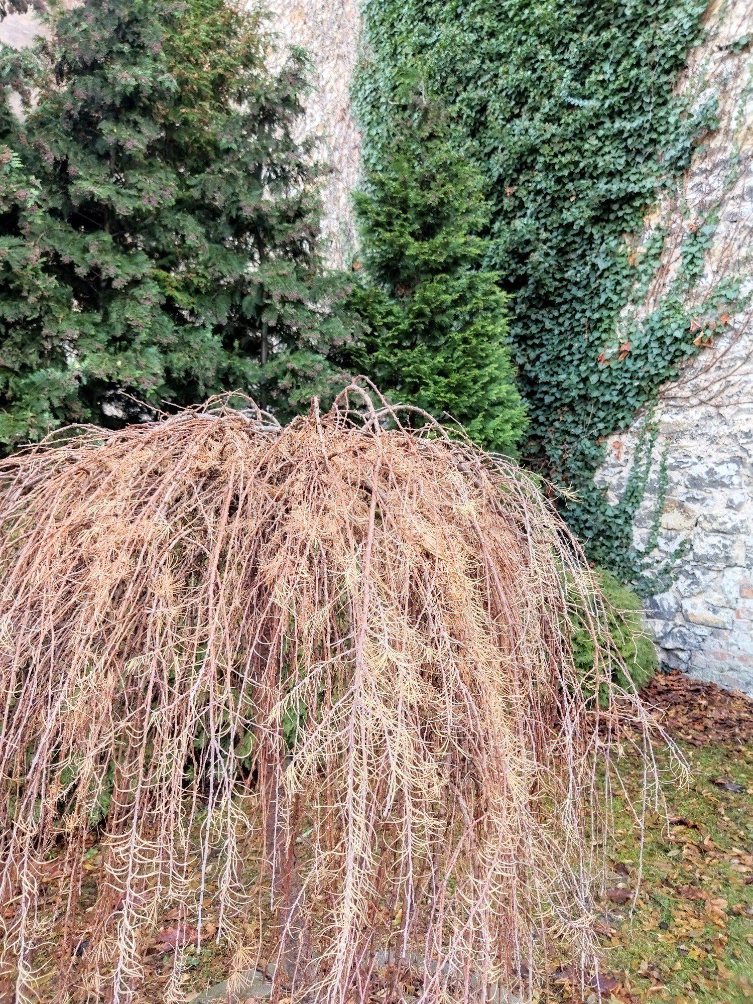 drzewko zdjęcie standardowe z hdr i ai poco m3