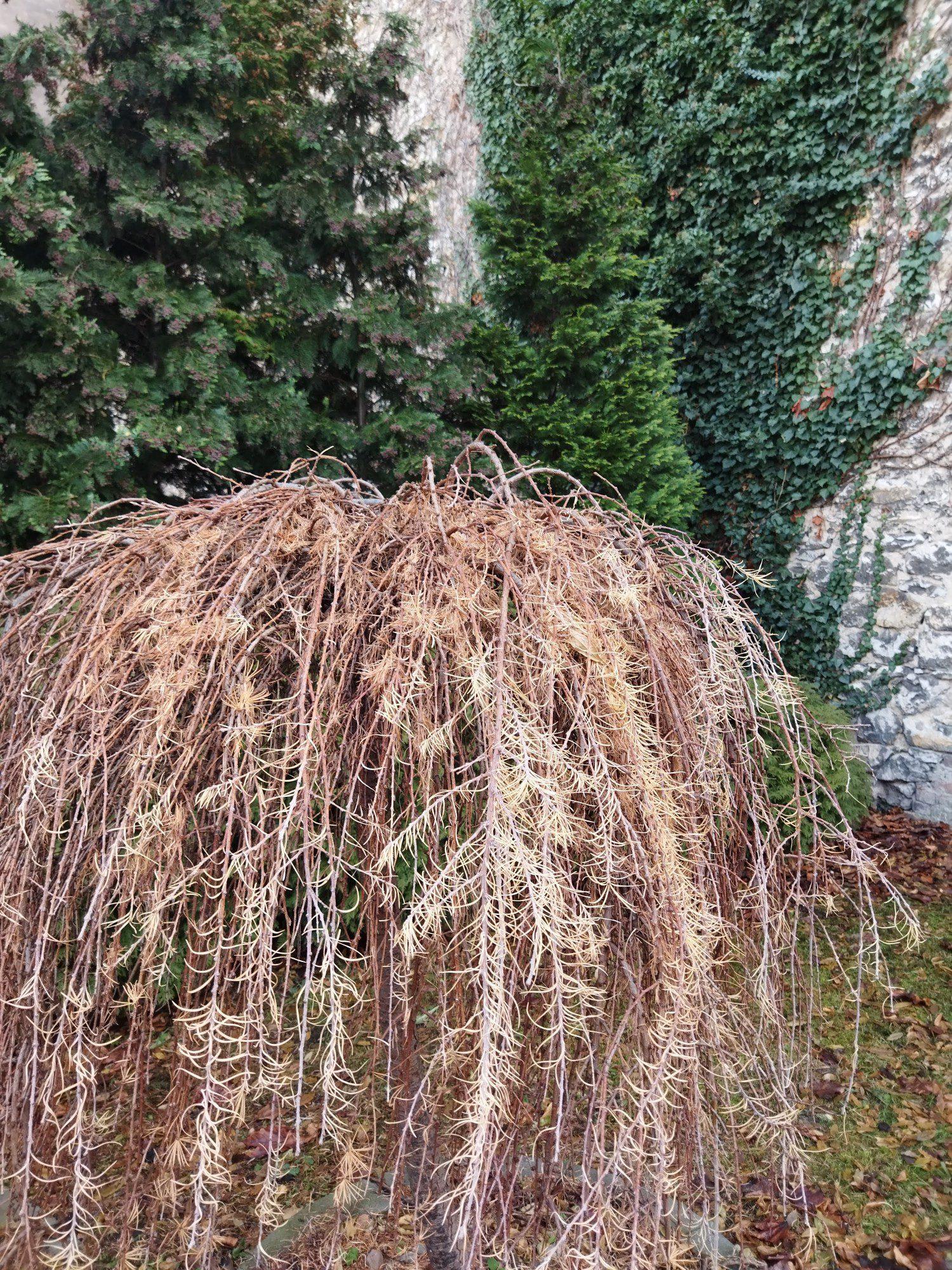 zdjęcie standardowe z ai drzewko poc m3