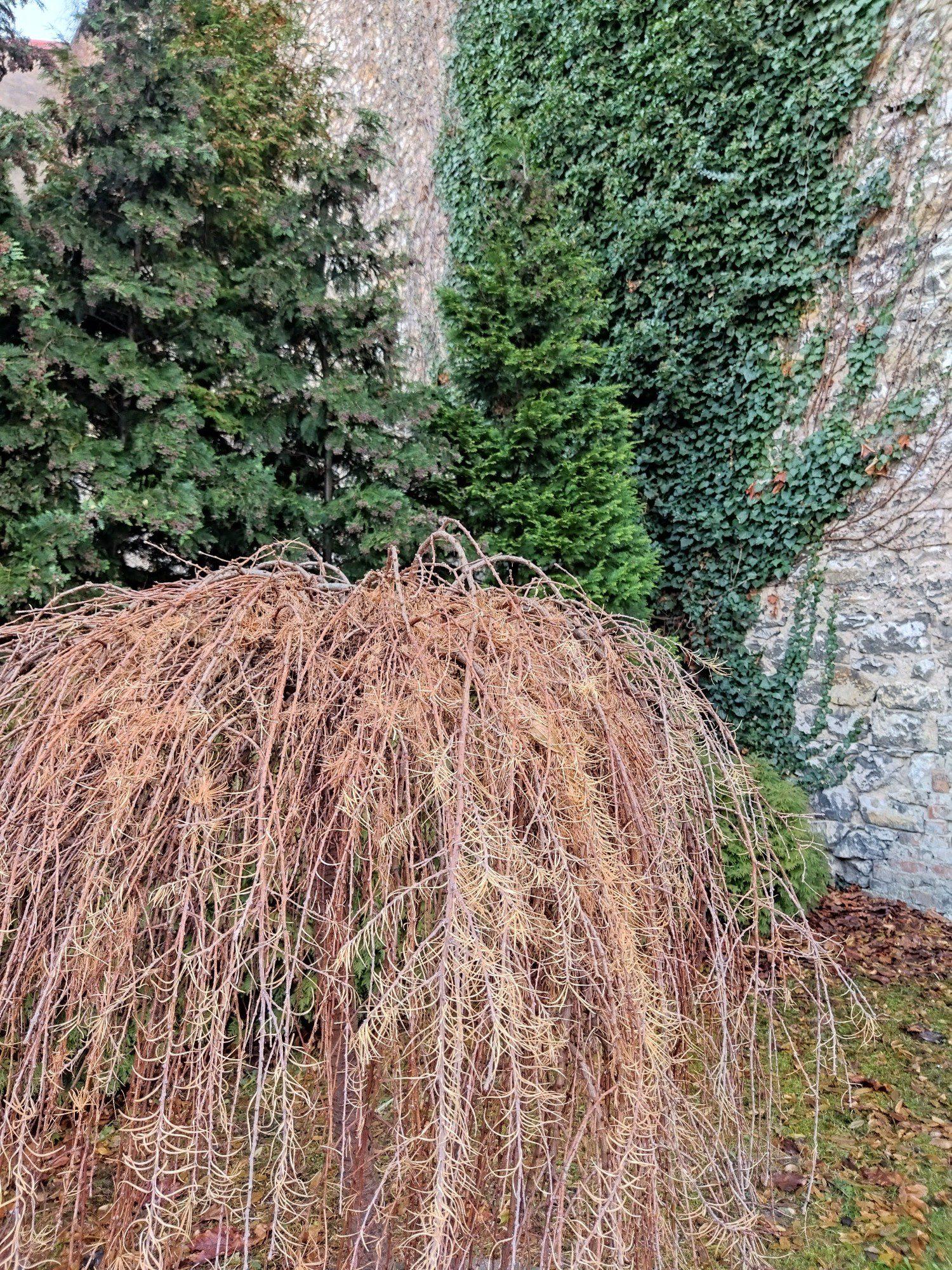 drzewko zdjęcie standardowe z hdr poco m3