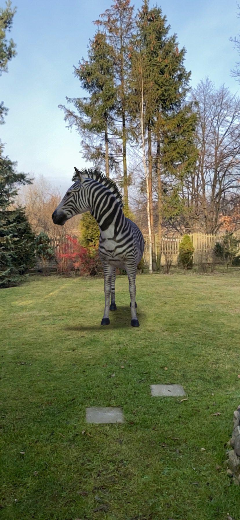 zebra AR Google