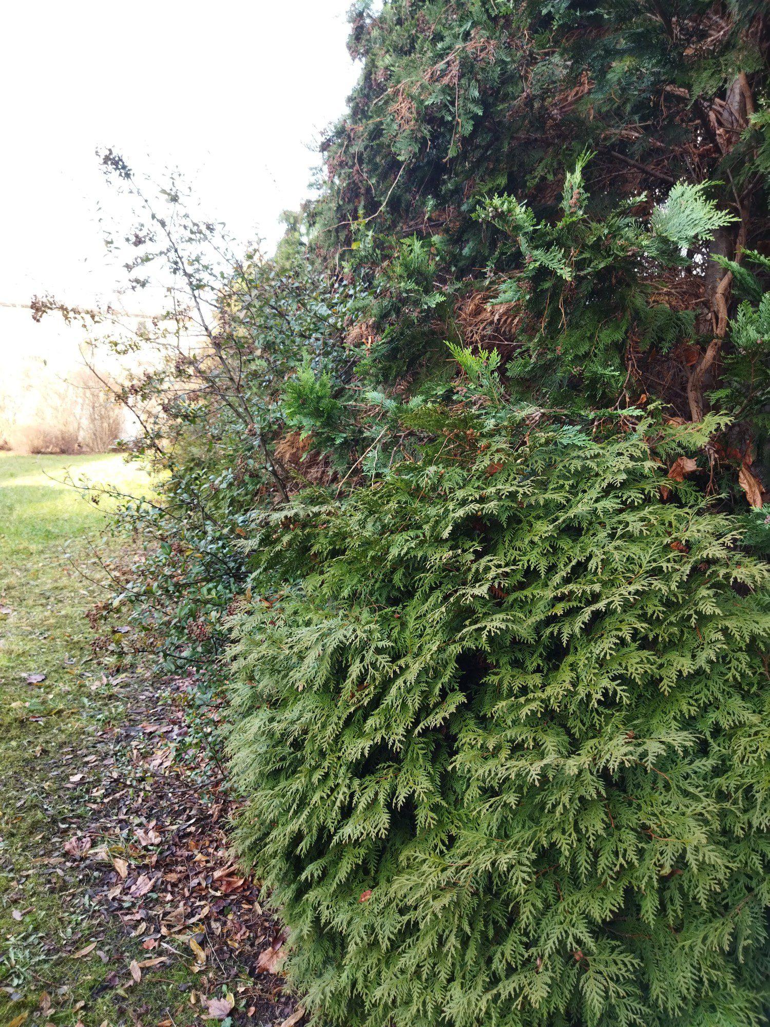 zieleń zdjęcie standardowe poco m3