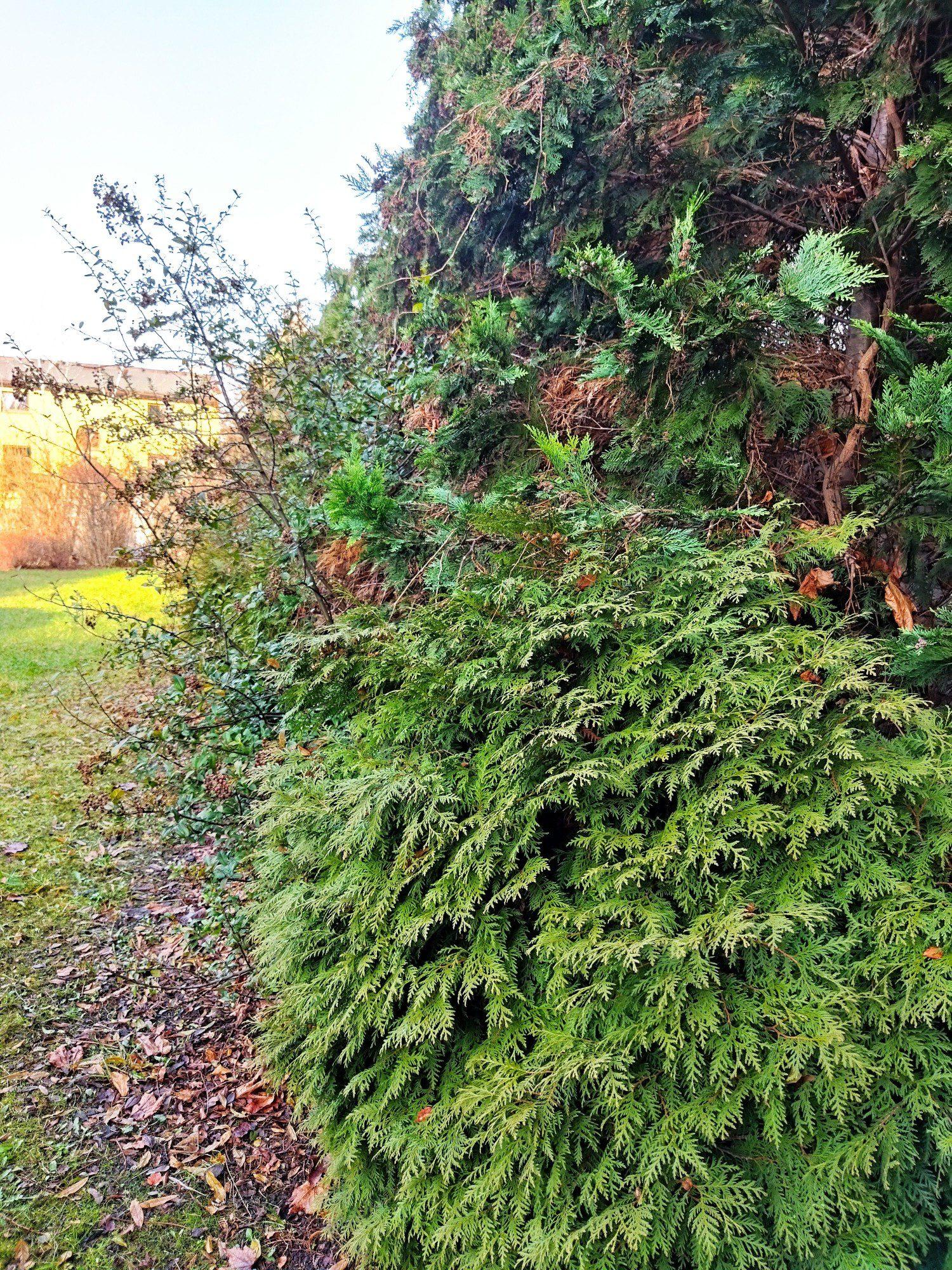 zieleń zdjęcie standard poco m3 z HDR