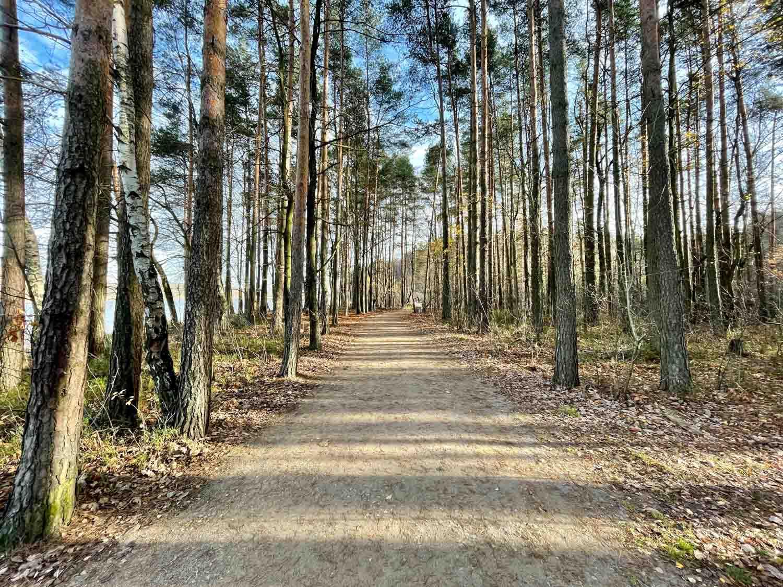 leśna ścieżka zdjęcie iphone 12 pro