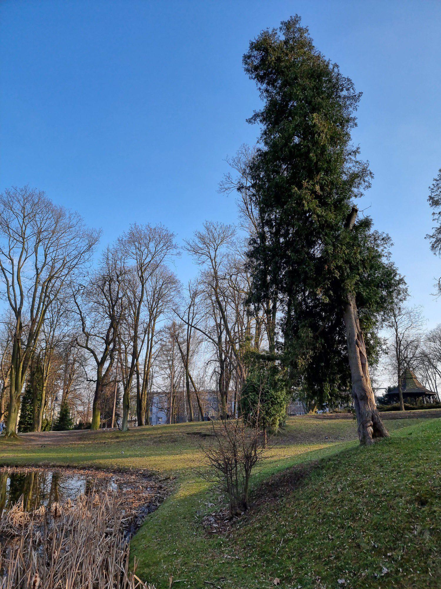 drzewo zdjęcie standardowe Samsung Galaxy S21 Ultra