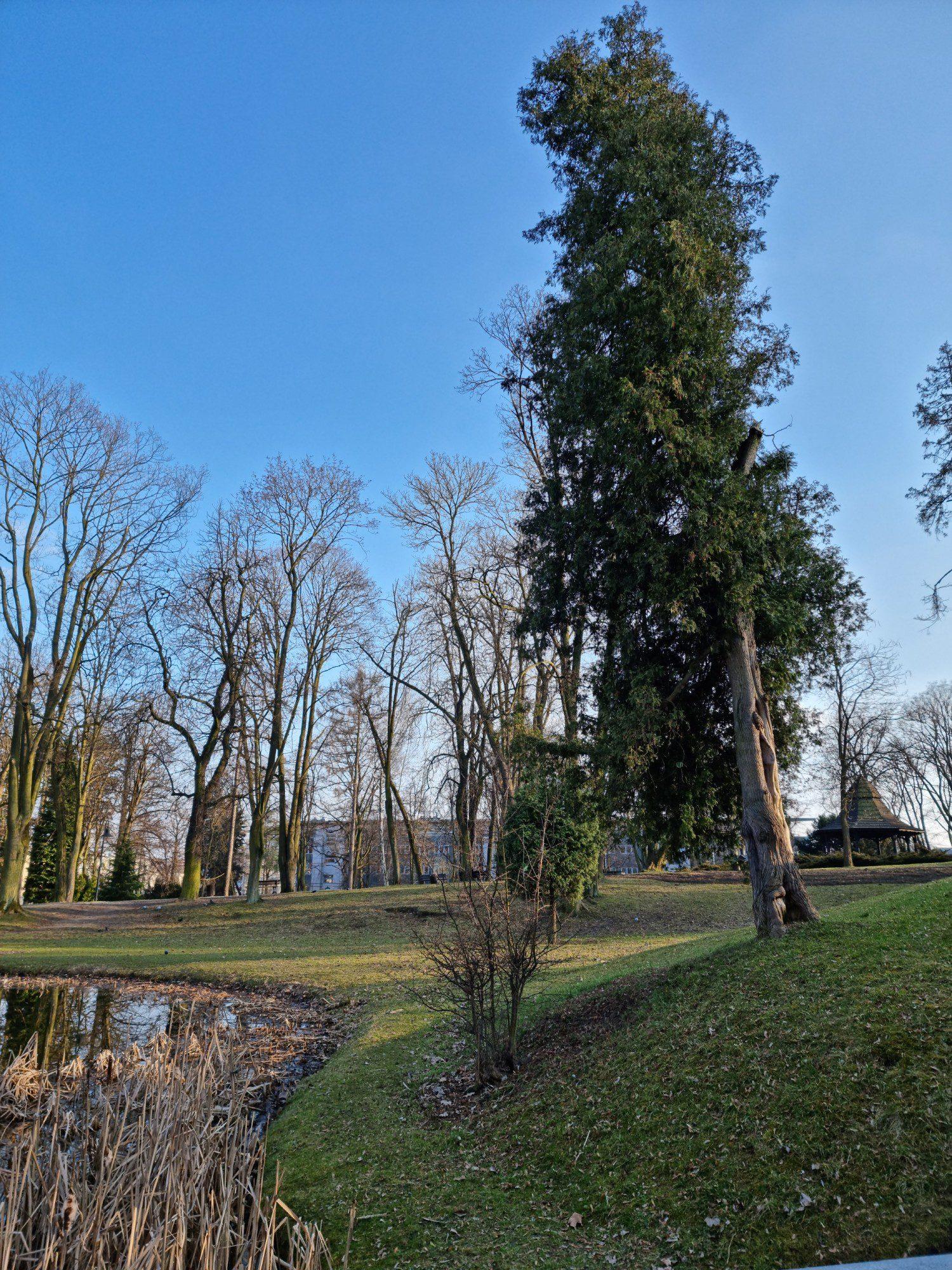 drzewno zdjęcie 108 mpix Samsung Galaxy S21 Ultra