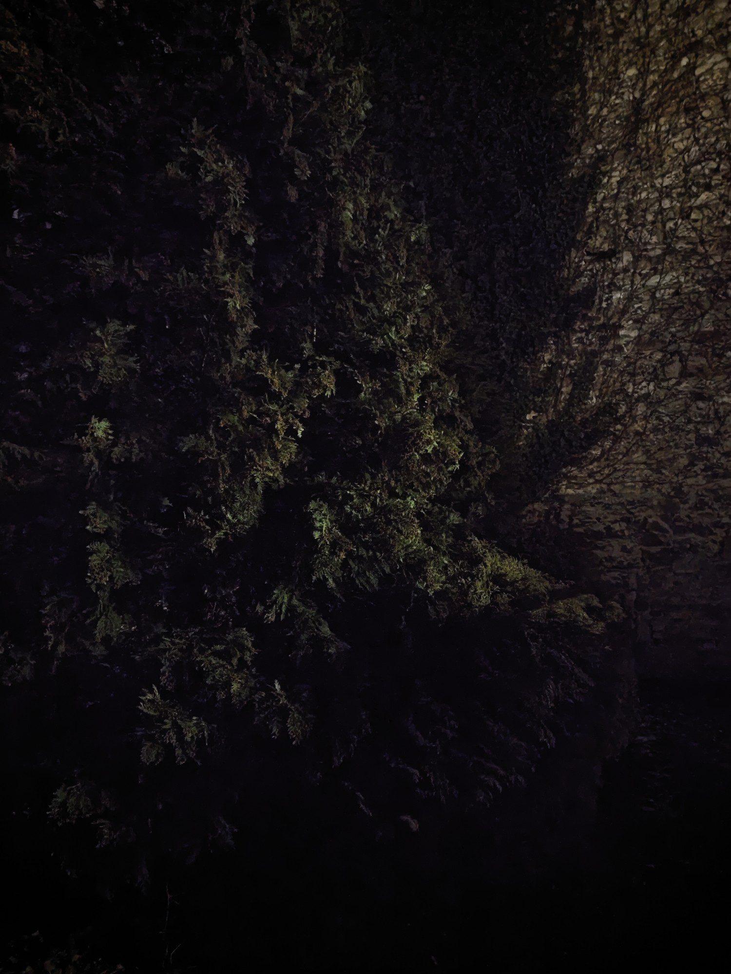 porównanie zdjęcie nocnce w trybie standardowym Mi 11