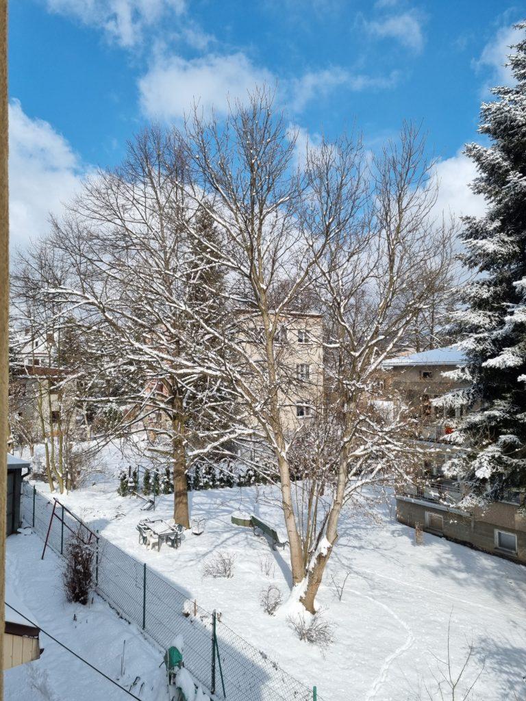 S21 główny drzewo śnieg