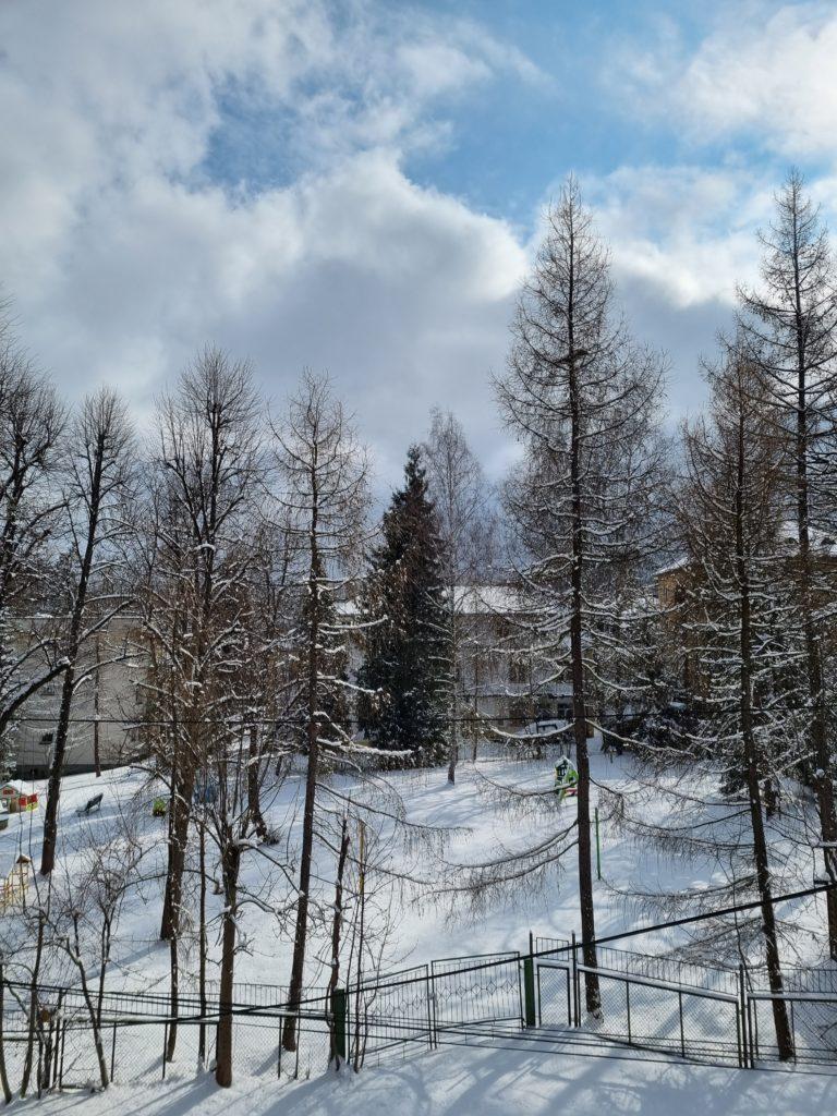 S21 Plus główny drzewa