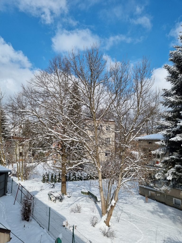 S21 Plus główny drzewo śnieg