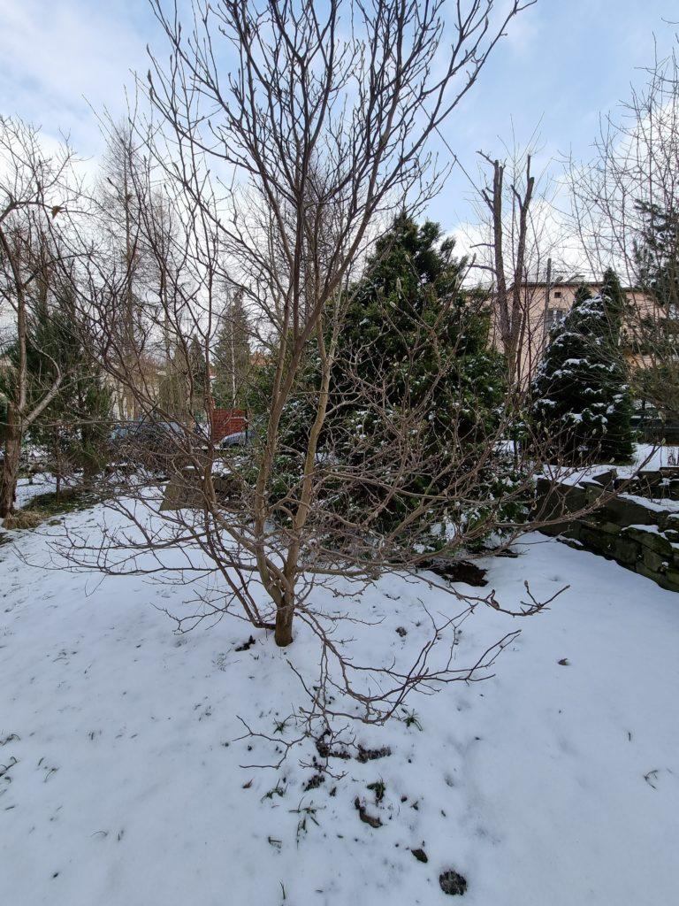 S21 Plus Ultra drzewo drugie w tle
