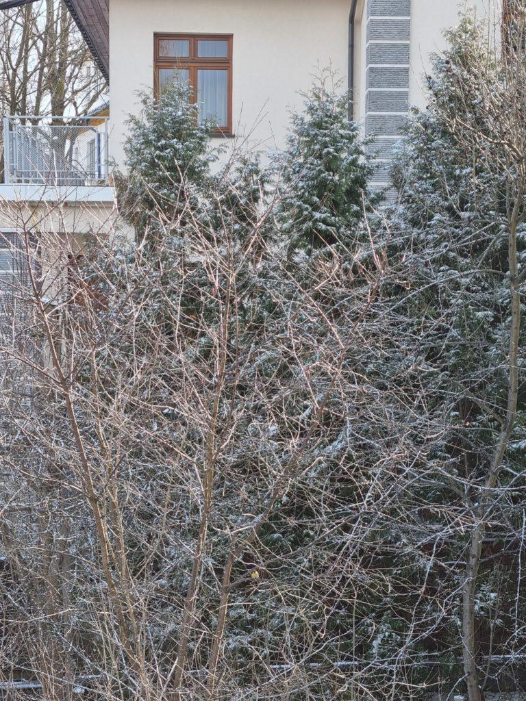 S21 Plus zoom drzewko