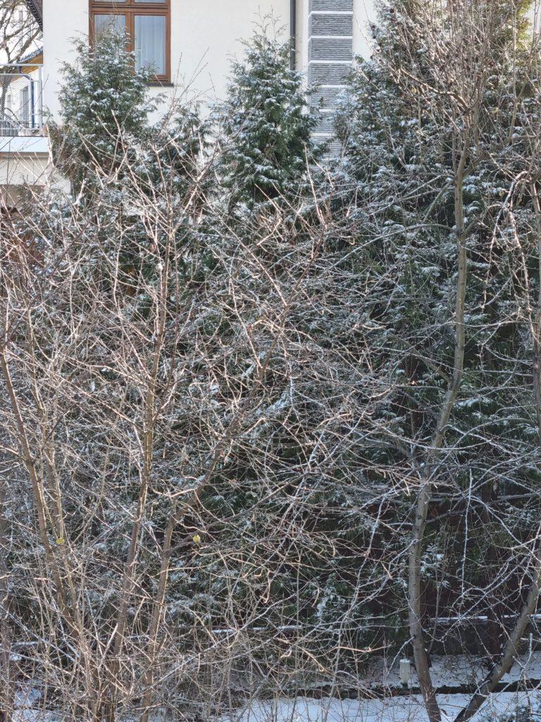 S21 zoom drzewko
