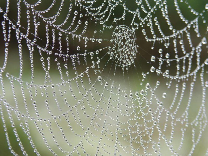 Naukowcy zamienili pajęczyny w muzykę. Brzmi jak z horroru