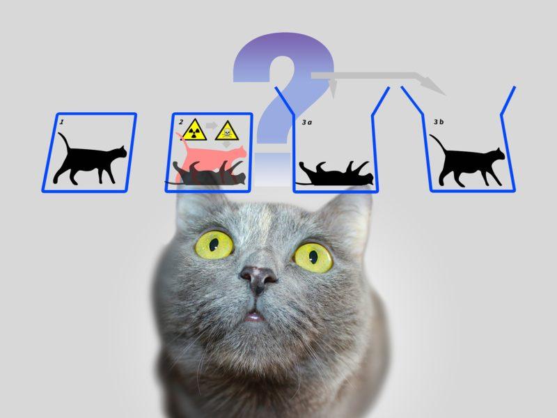Kot Schrödingera, czyli mechanika kwantowa a zdrowy rozsądek