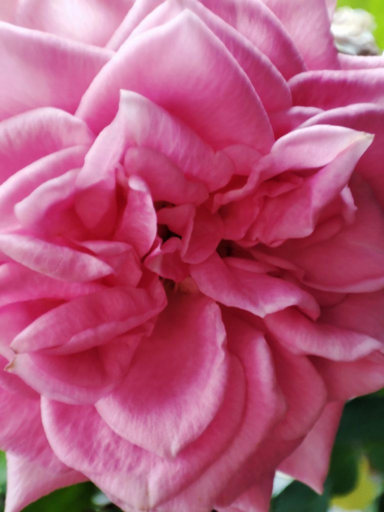 redmi note 10 pro zdjęcie kwiatka