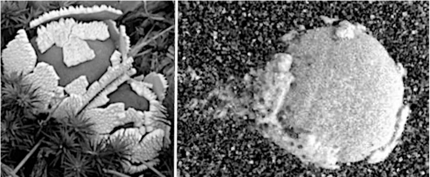 zbliżenie na marsjańskie grzyby
