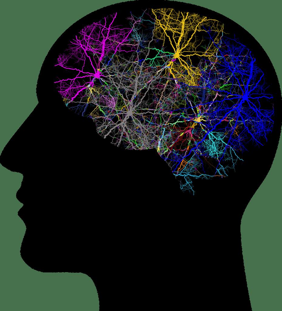 mózg nerwy neurony