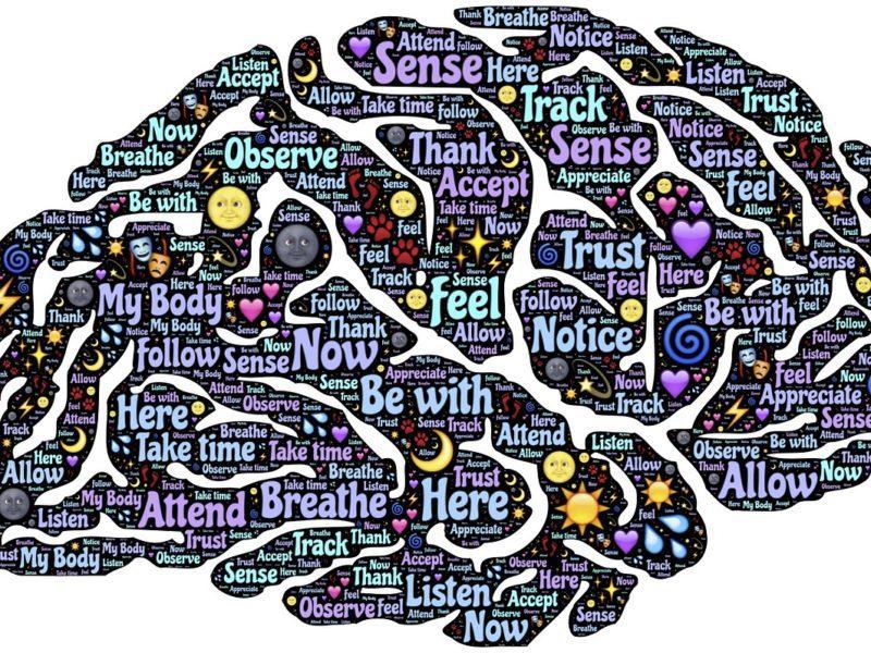 Ciekawe fakty o ludzkim mózgu. Budowa, funkcje, potencjał i interesujące ciekawostki