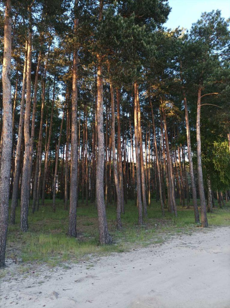 drzewa w obiektywie głównym Redmi Note 10 5G