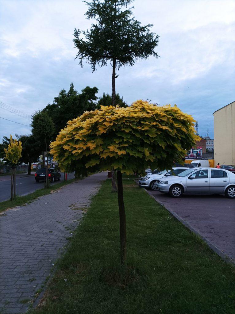 drzewo-xiaomi-redmi-note-10-5g