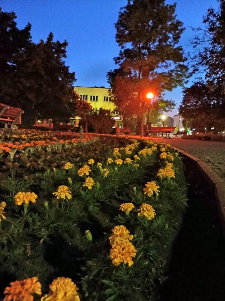 kwiaty w trybie nocnym Redmi Note 10 5G