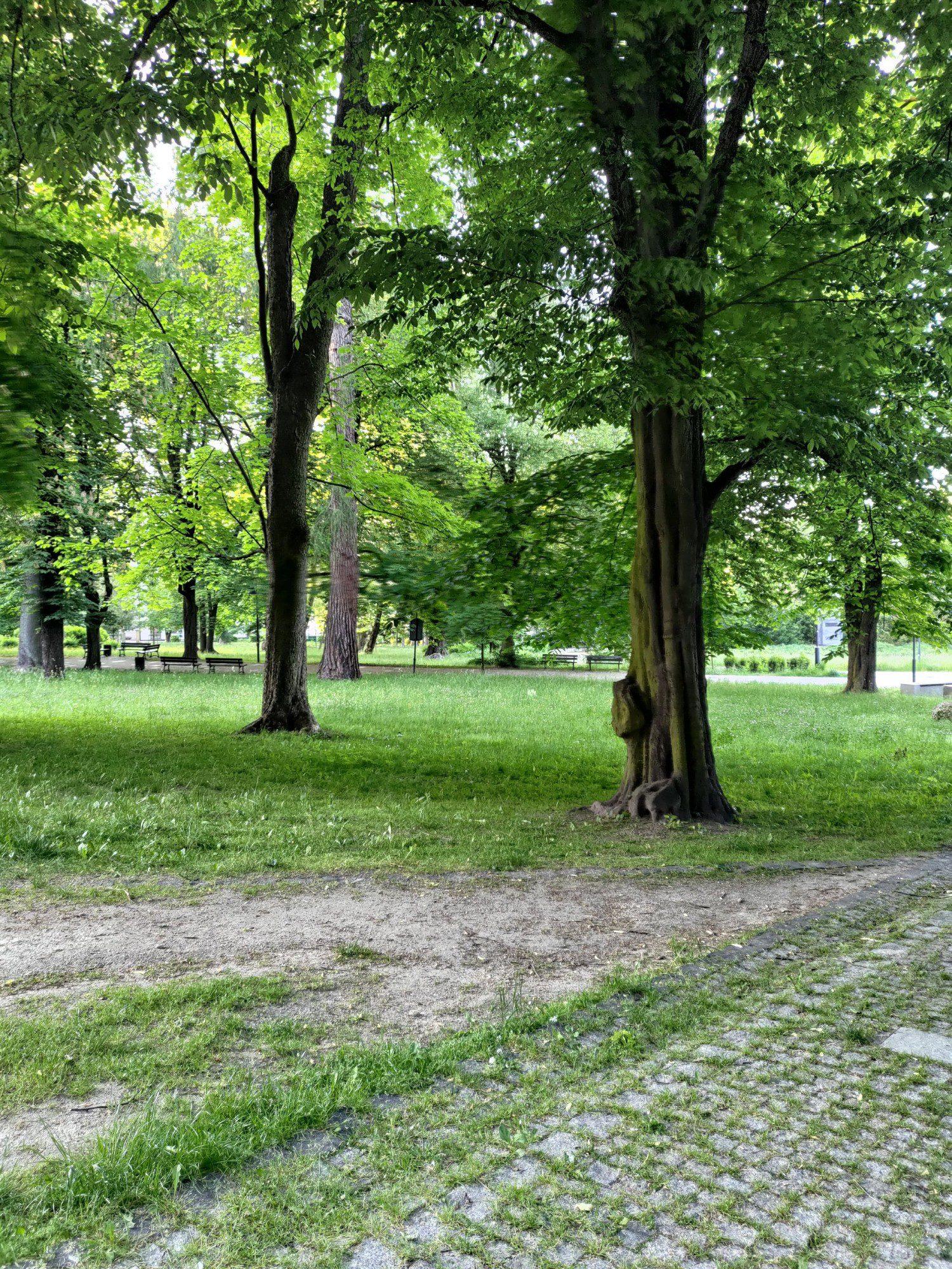 park zdjęcie aparatem zenfone 8