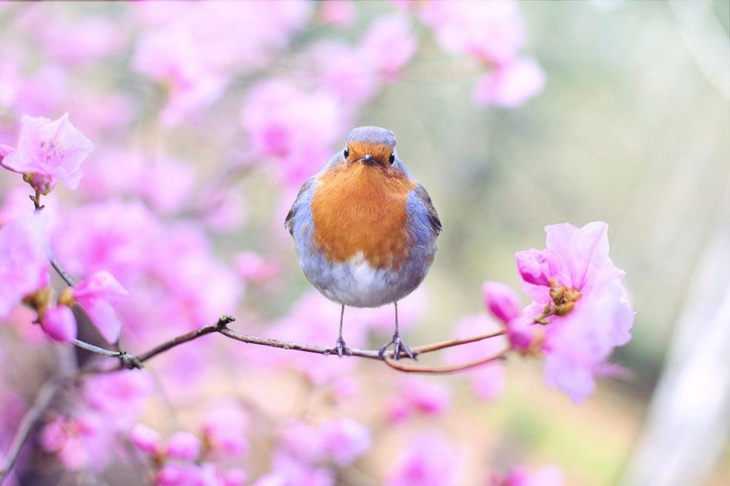 ptak aplikacja merlin bird ID