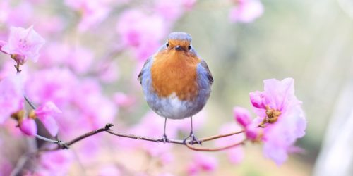 Jak sprawdzić, który ptak śpiewa? Poznaj aplikację Merlin Bird ID, rozpoznającą ćwierkanie