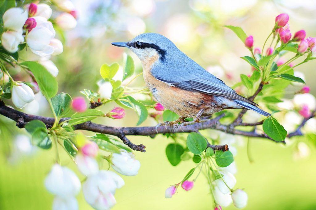 merlin bird id aplikacja do rozpoznawania ptaków