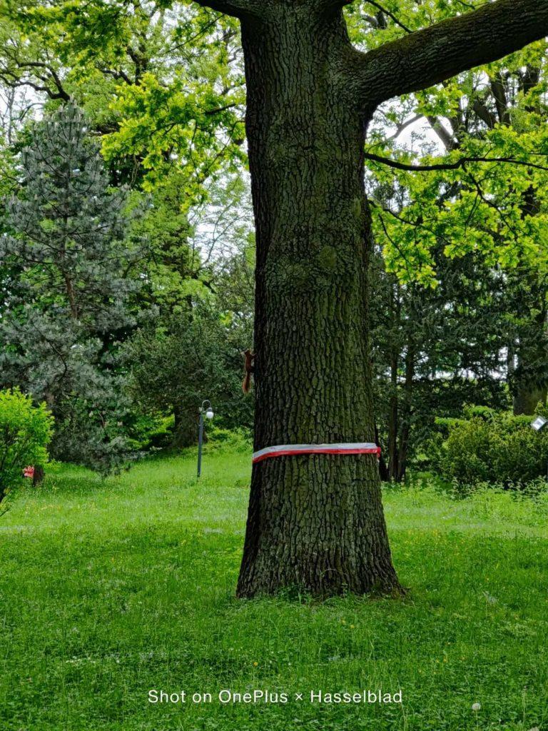 drzewo w teleobiektywie OnePlus 9 Pro