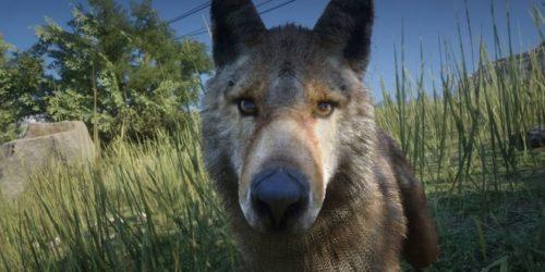 Czy Red Dead Redemption 2 to dobra gra do nauki o zwierzętach?