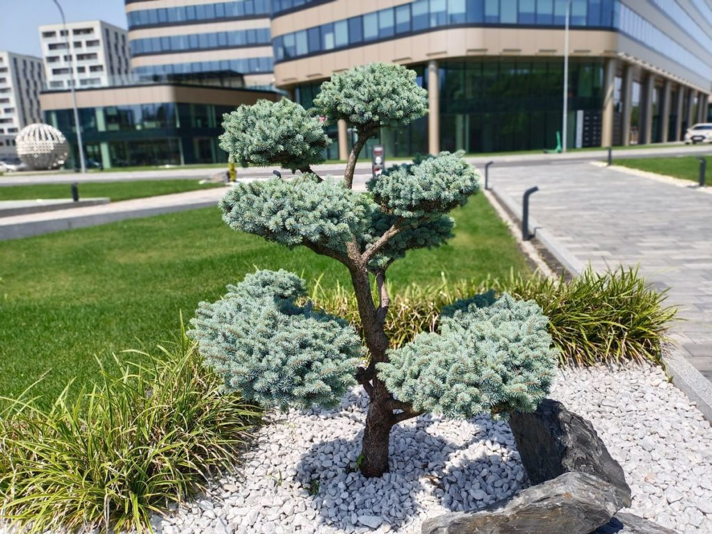drzewko z bokeh V21 5G