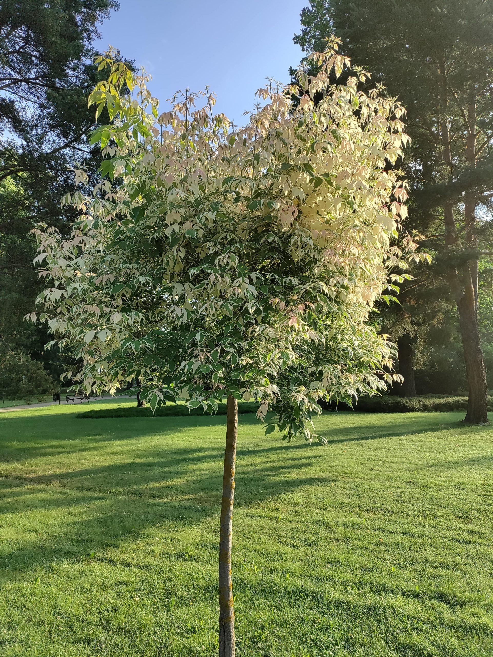 Nord CE 5G drzewko główny