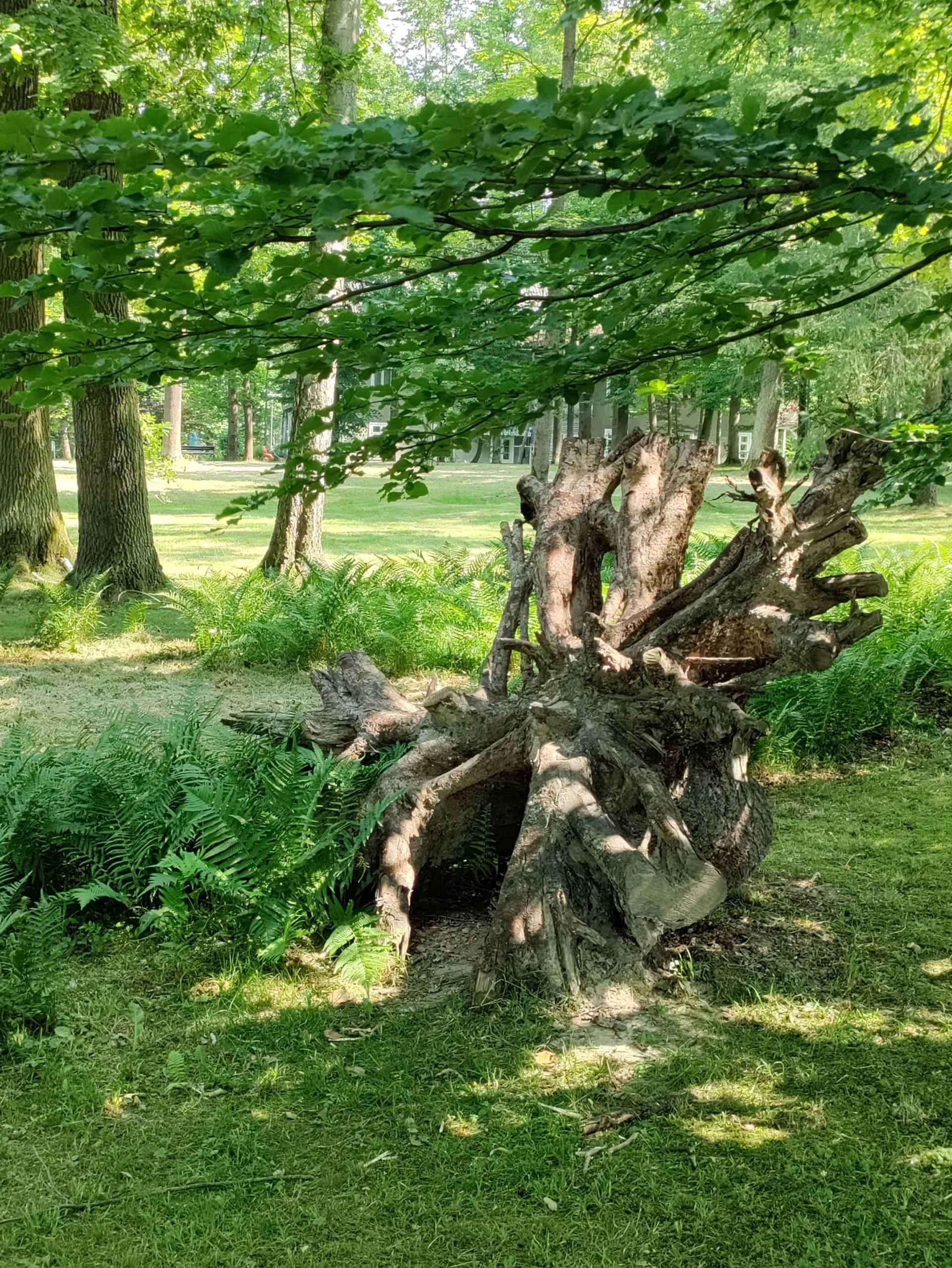 Nord CE 5G drzewo konary