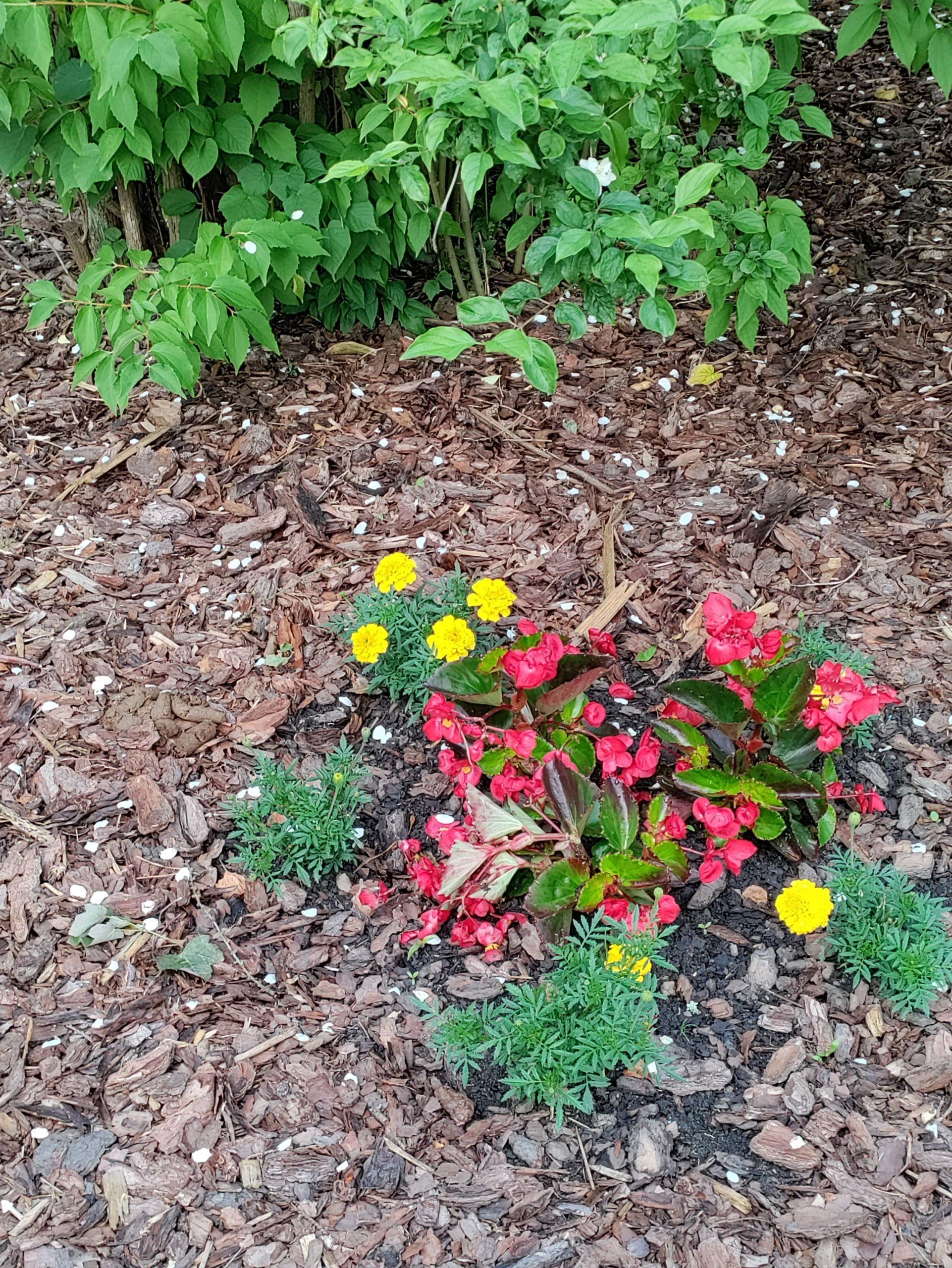 Nord CE 5G kwiaty zoom