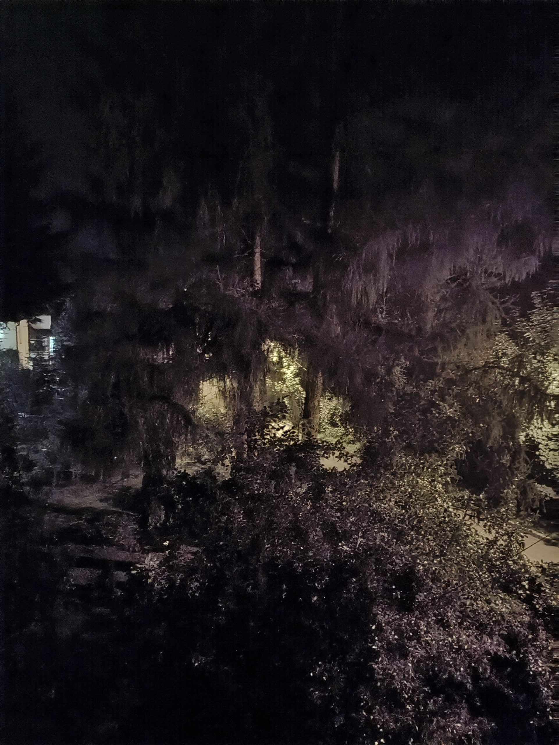 Nord CE 5G noc z trybem drzewo