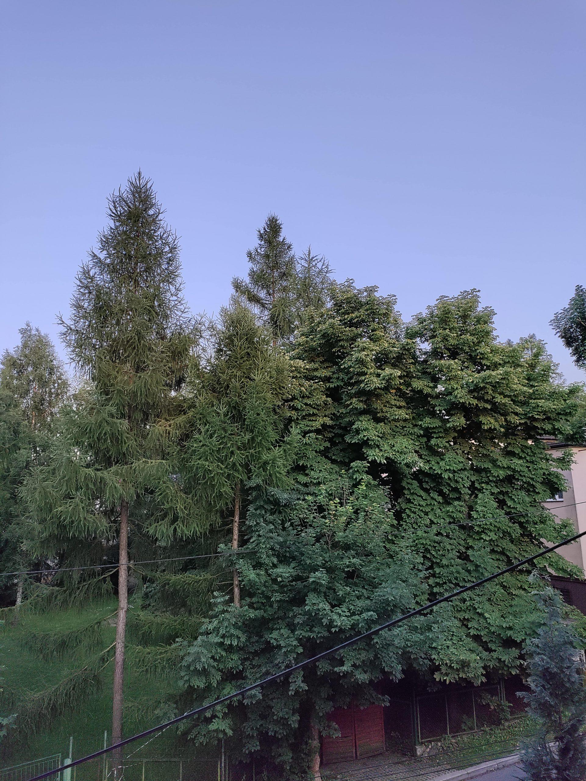 Nord CE 5G wysoka rozdzielczość drzewa 2