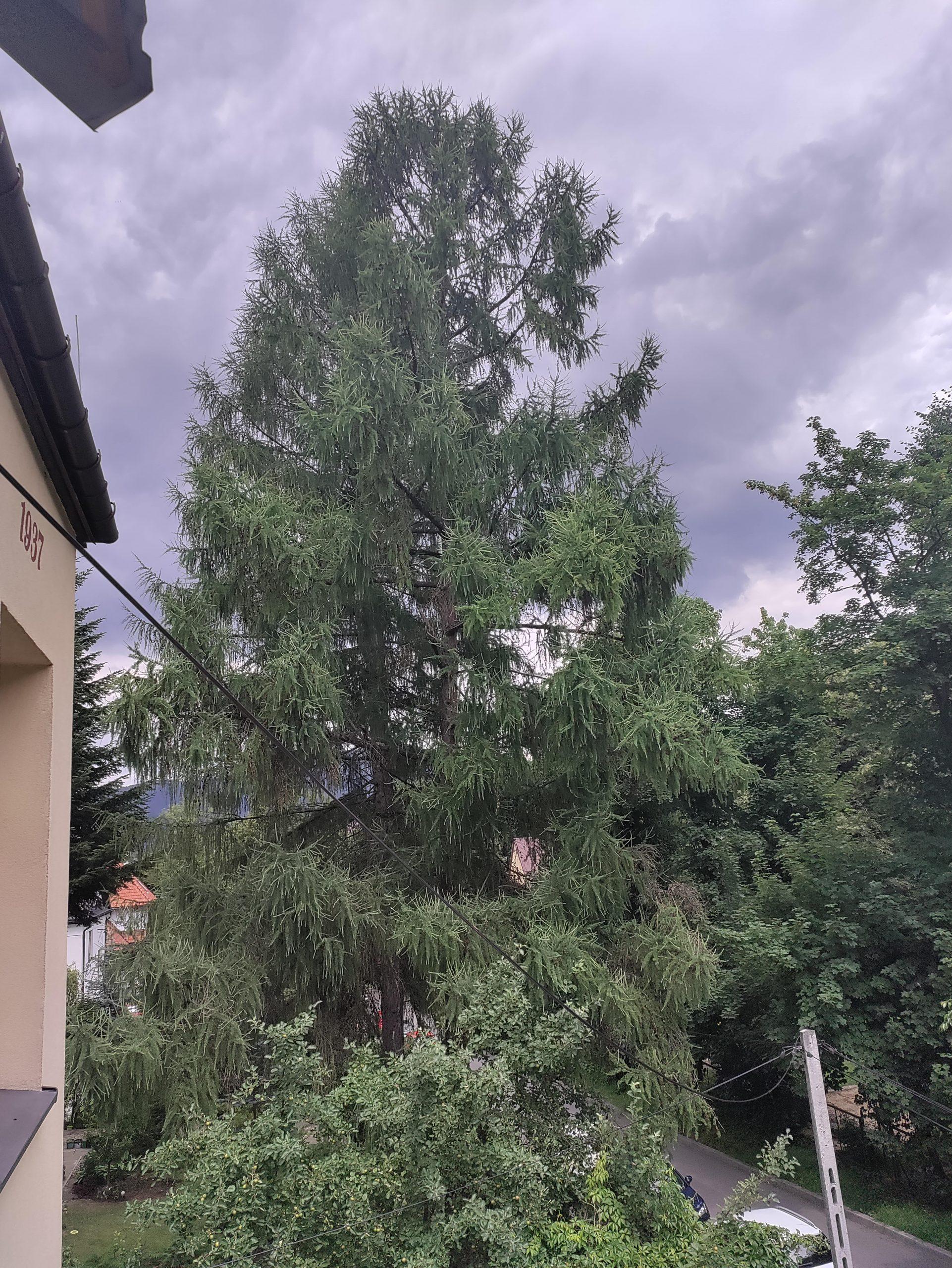 nord-ce-5g-wysoka-rozdzielczosc-drzewo-dom