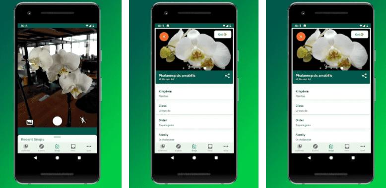 kwiaty aplikacja do rozpoznawania roślin na smartfon