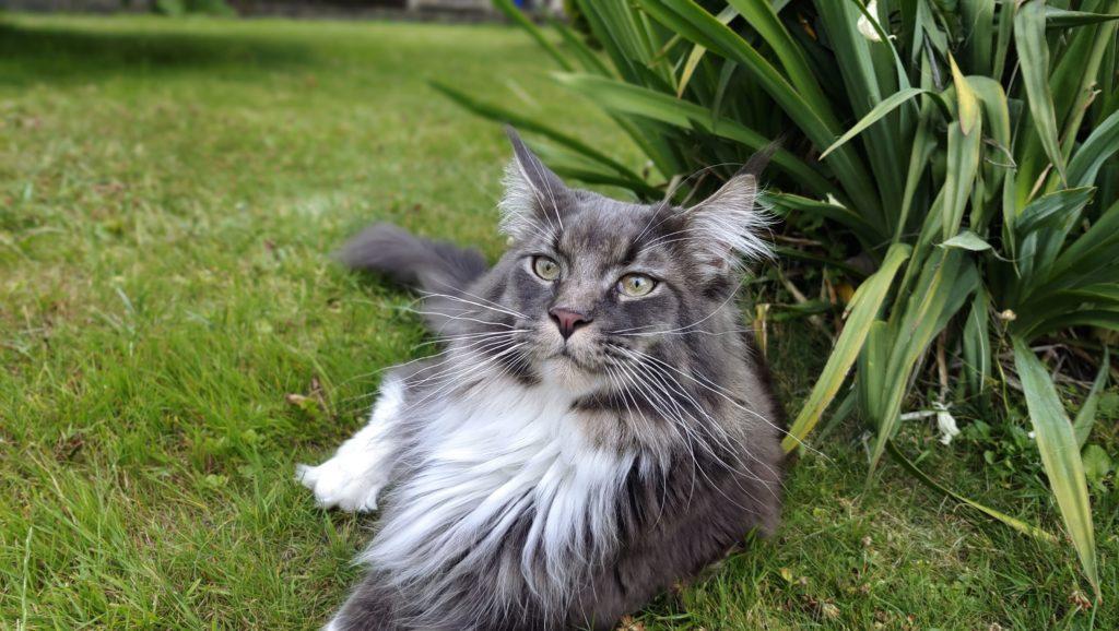 portret kota zrobiony vivo x60 pro 5g