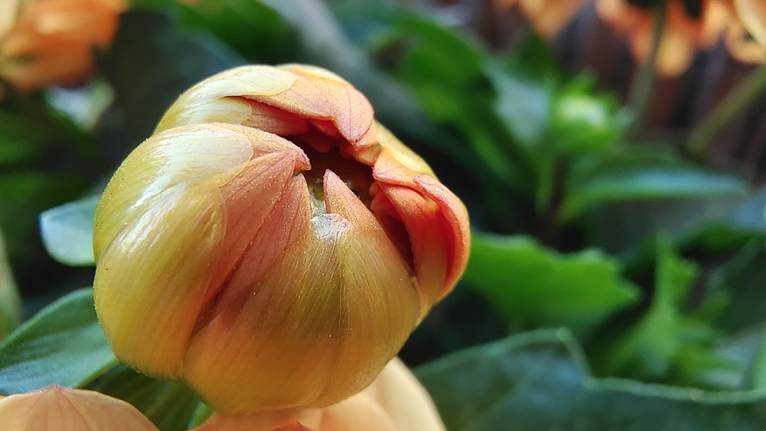 pak-kwiatu-vivo-x60-pro-5g-makro