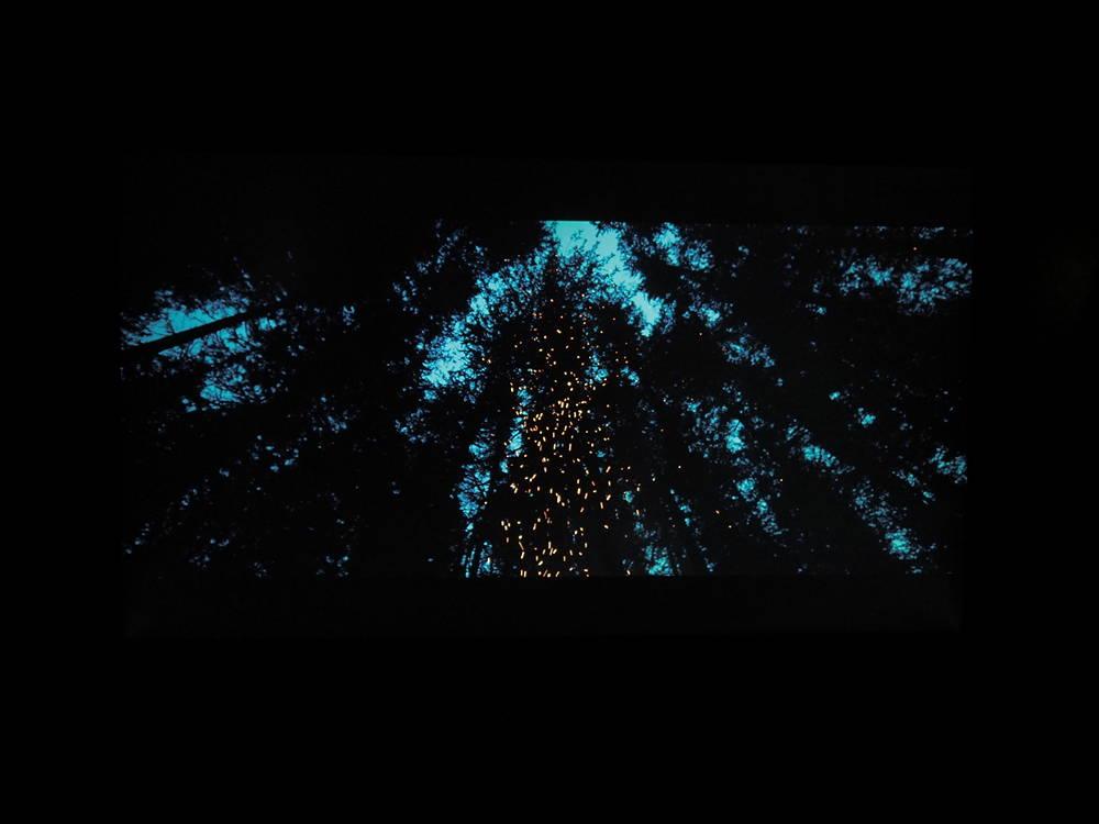 ciemny las iglasty o zmierzchu