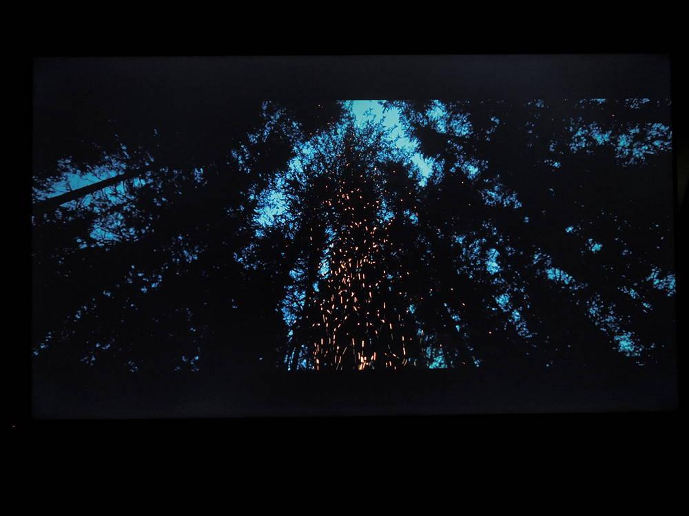 ciemny las iglasty o świcie